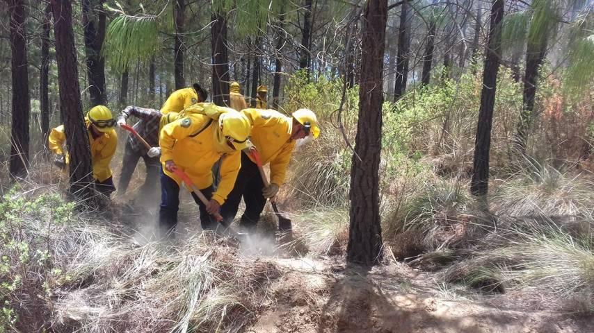 Registra Protección Civil 6 incendios forestales en las últimas horas
