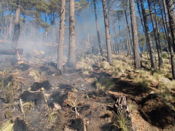 Registra Puebla 56 incendios forestales: Manrique