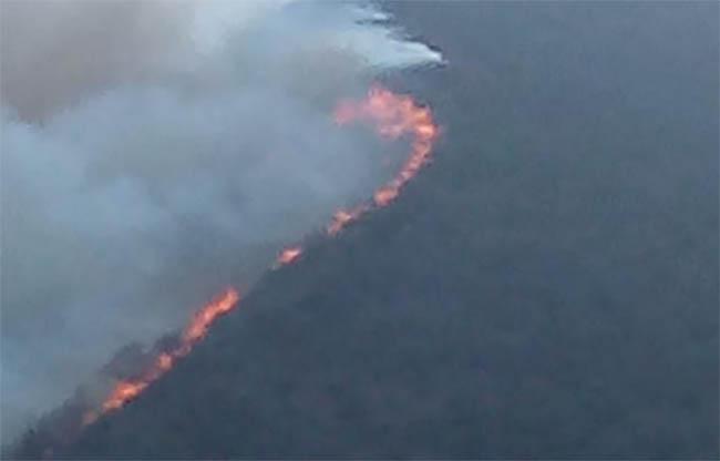 Incendio consume hectáreas boscosas en Tetela de Ocampo