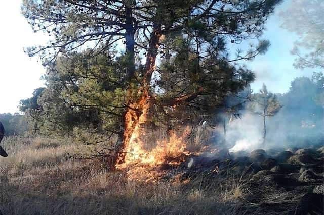 Incendio en Sierra Negra consume casi 4 hectáreas de bosque