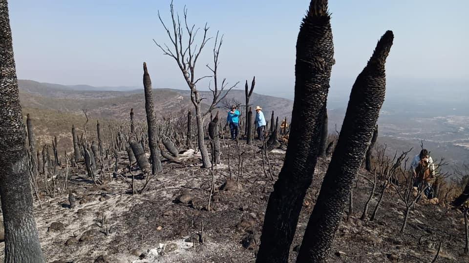 Incendio forestal en Tlacotepec y Juan N. Méndez, casi liquidado en su totalidad