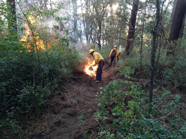 Baja 43% la cantidad de hectáreas dañadas por incendios forestales en Puebla