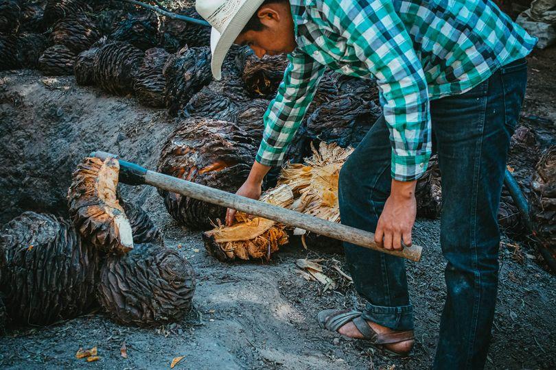 Mezcal de Tehuacán es reconocido como el mejor del país
