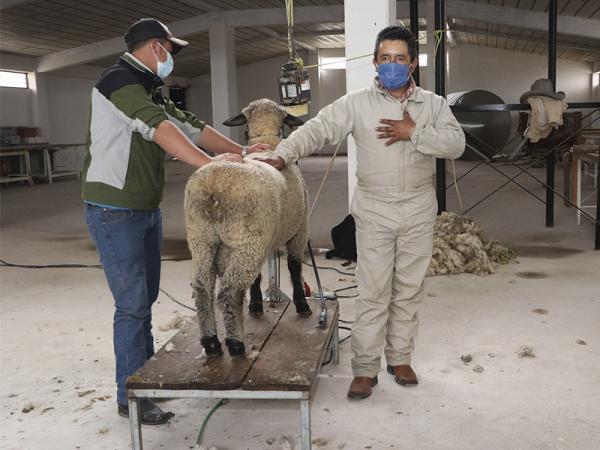 Capacita SDR a productores poblanos sobre trasquilado de ovejas