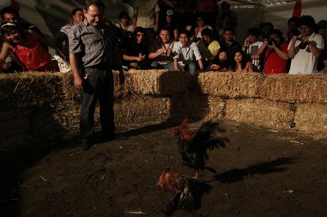Fiestas, peleas de gallos y jaripeos se realizan en Izúcar a pesar del Covid