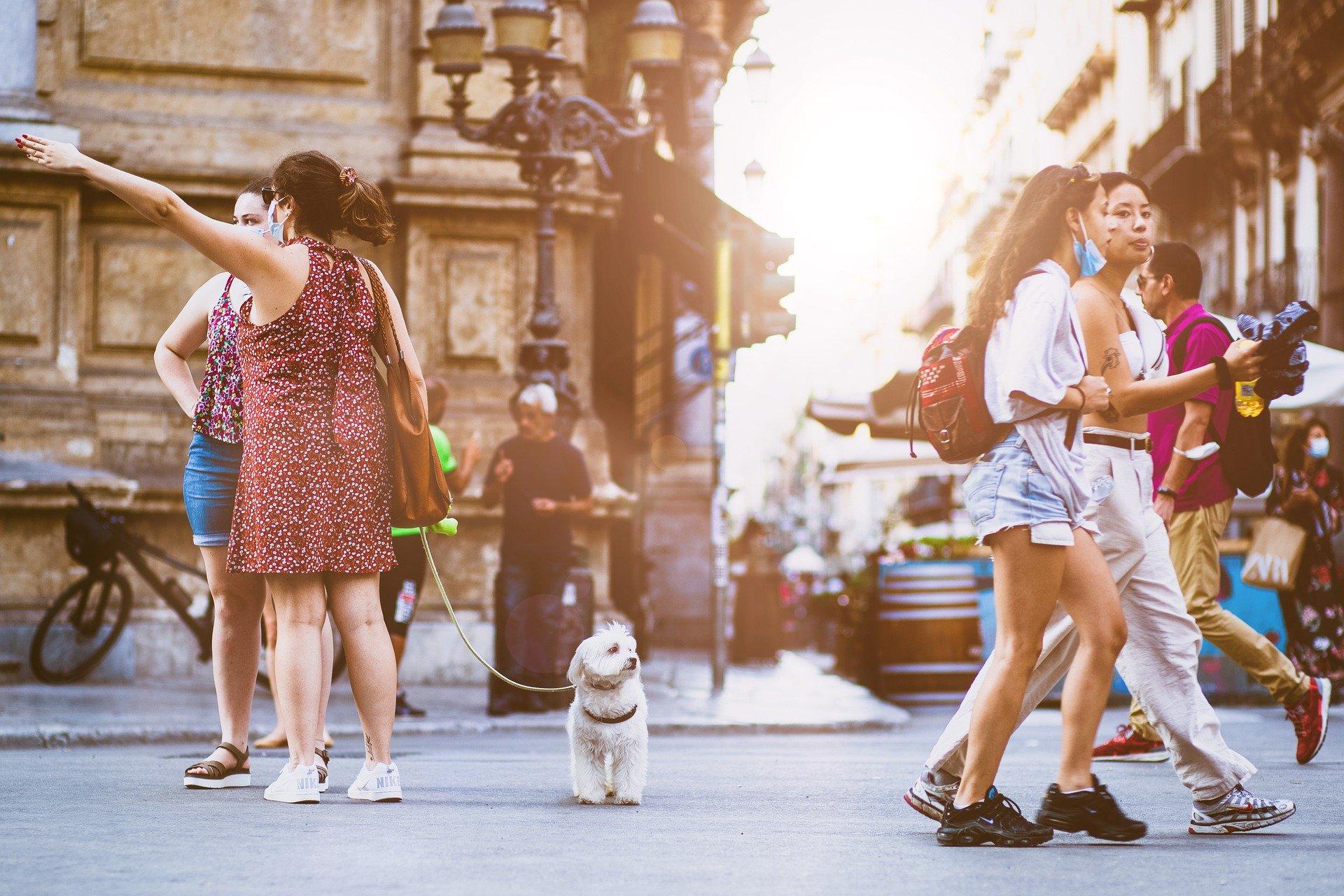Propone Kuri que Puebla sea el primer estado Pet Friendly