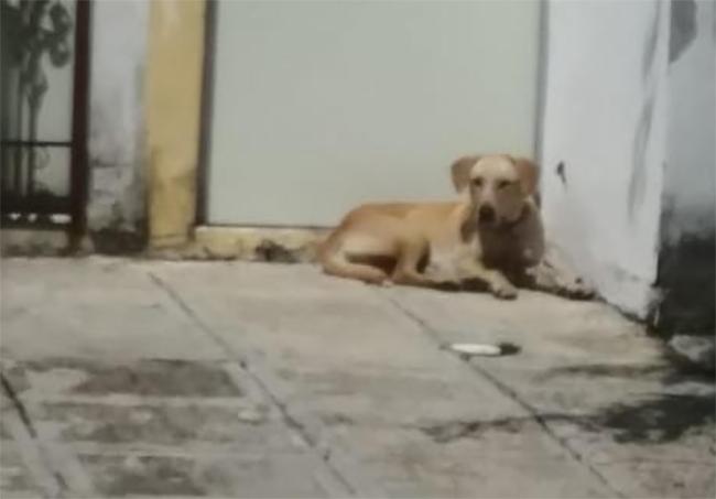 De nueva cuenta se registra un ataque de perros en Atlixco