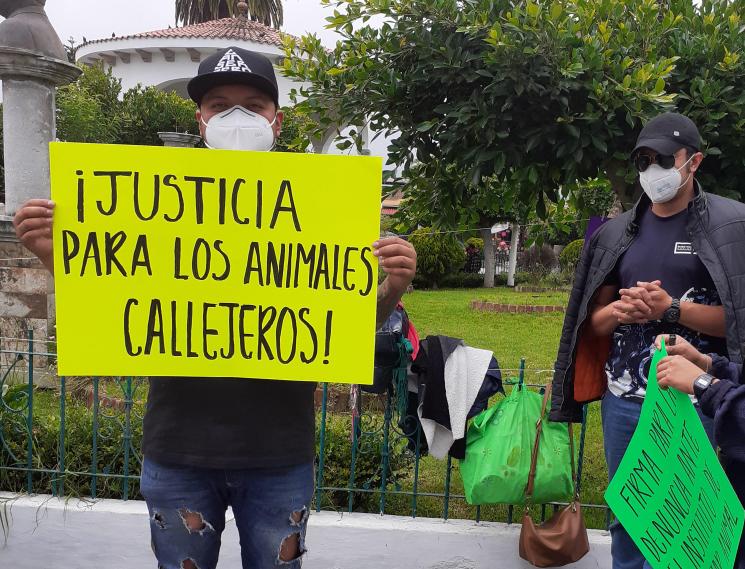 Piden que se investigue envenenamiento de perros en Teziutlán
