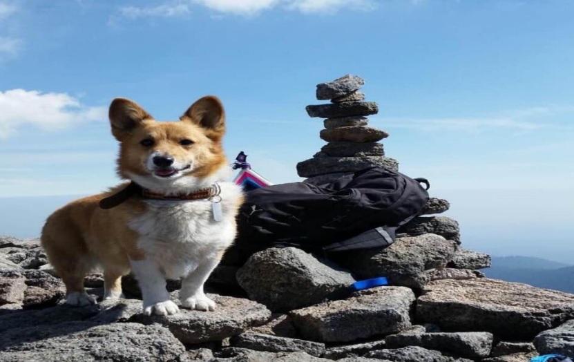Buscan a Malta, perro robado por sujetos armados  en Palmar de Bravo