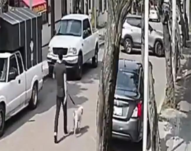 VIDEO Camioneta le pasa encima a joven con todo y su perro y sobreviven