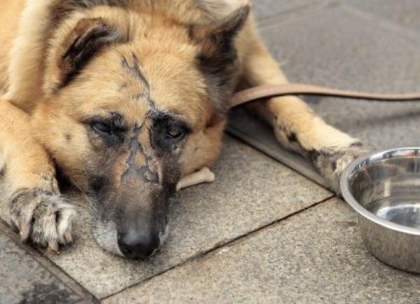 Cárcel y multas severas para quien maltrate animales en Puebla