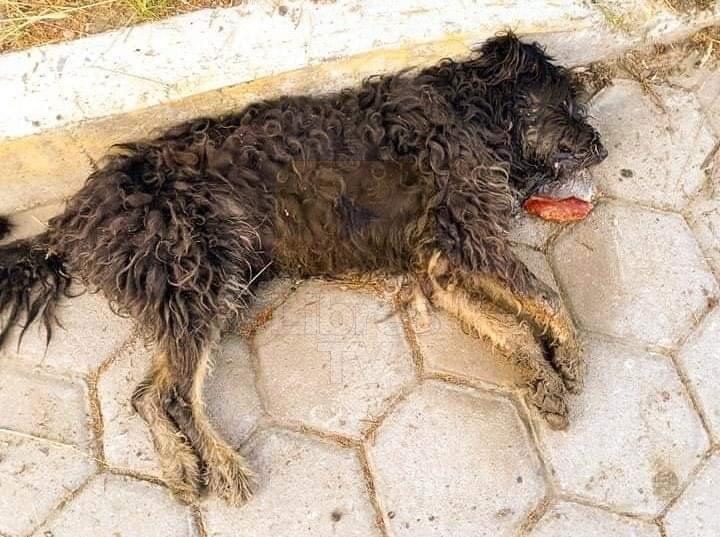 Matan a perros con carne envenenada en el municipio de Libres