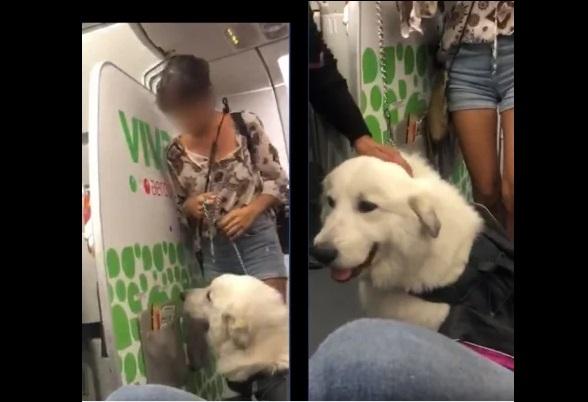 Se quejan de Viva Aerobus por negar ingreso a perro de apoyo