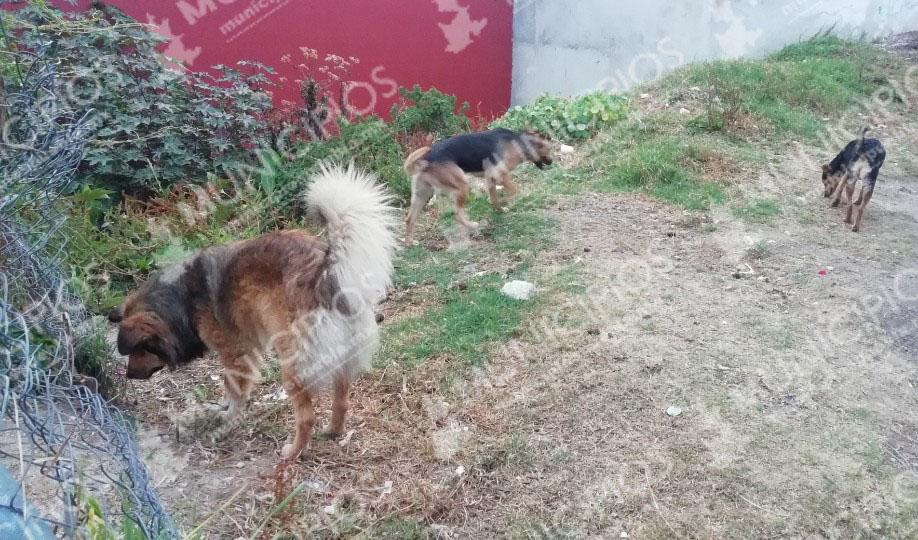 Aumentan ataques de perros en Zacapoaxtla