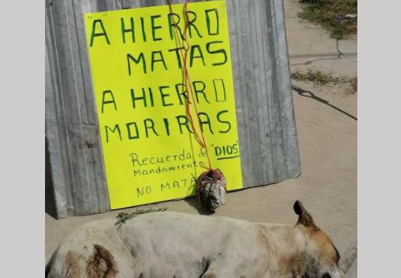 Vecinos de Tlacotepec amenazan a mataperros