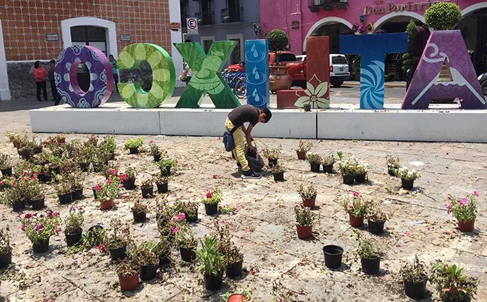 Se pelean por plantas del tapete monumental de Atlixco