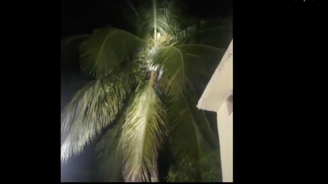 VIDEO En Veracruz habitantes intentaron cazar a nahual
