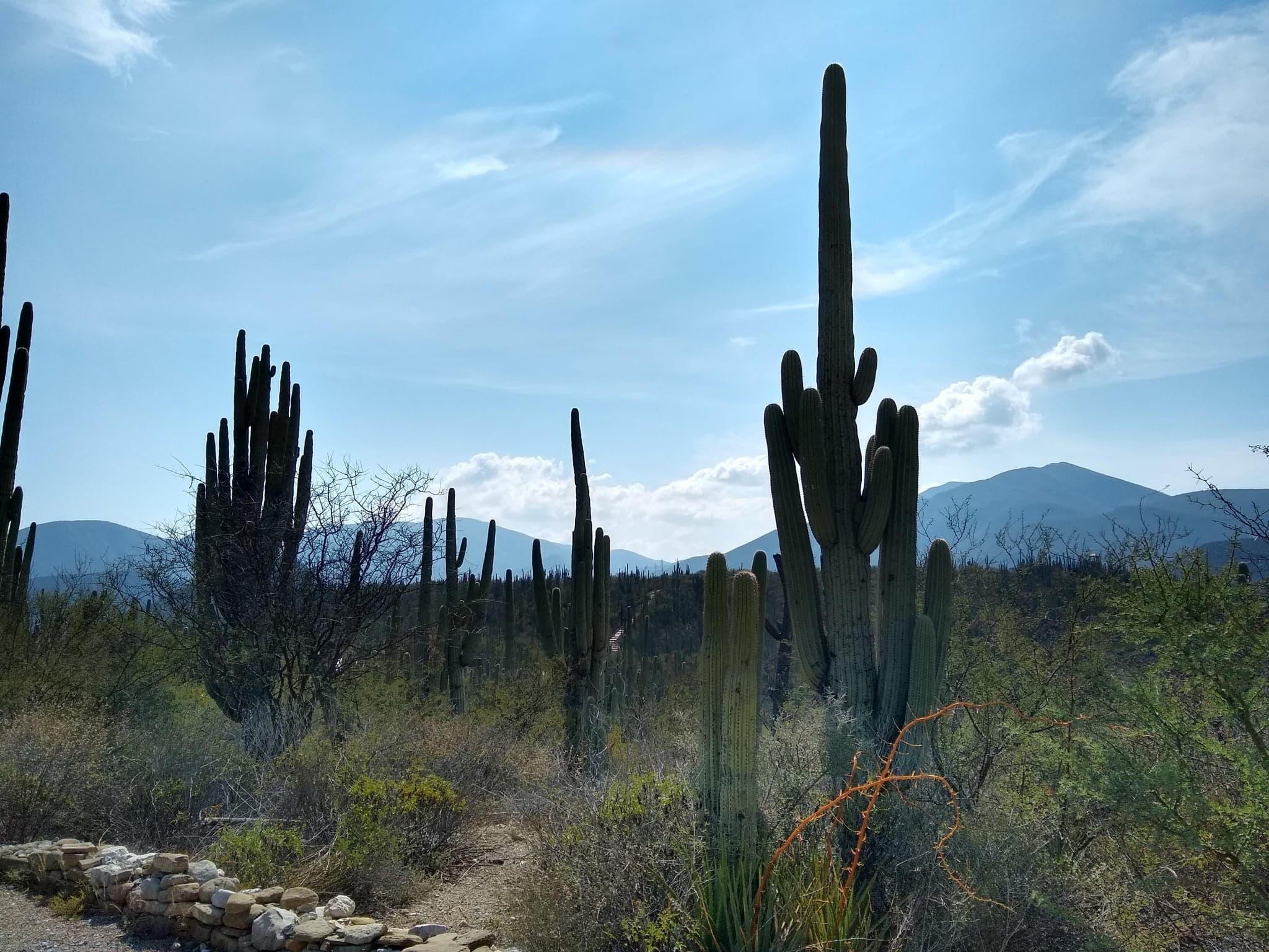 Invitan a la expo artesanal Tehuacán y la Reserva de la Biósfera en Puebla