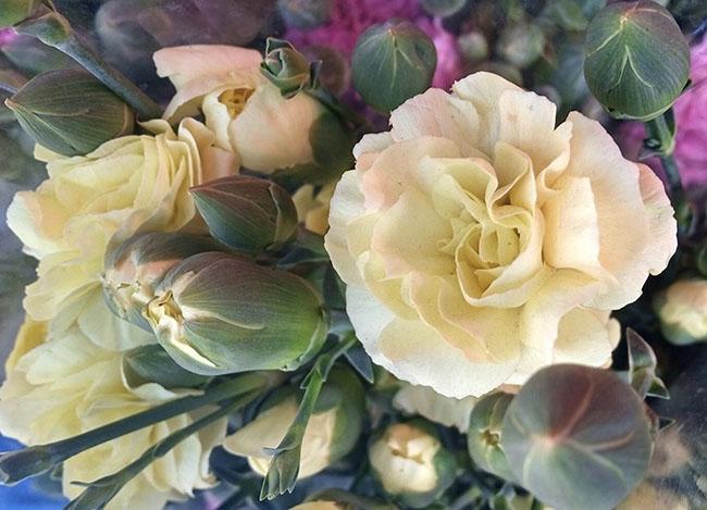 Inicia venta de toneladas de rosas en Atlixco para este 10 de mayo