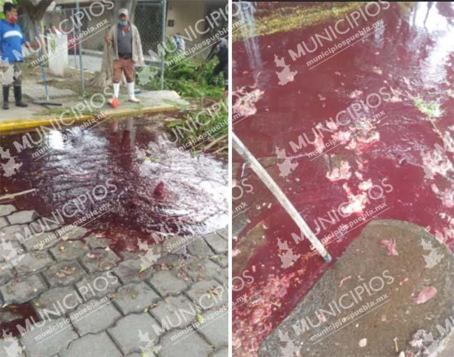 Drenaje de rastro de Tehuacán se vuelve a tapar y genera lagunas de sangre