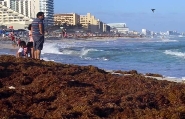 Advierten llegada de toneladas de sargazo a playas del caribe mexicano