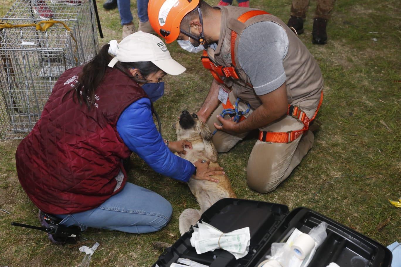 VIDEO Rescatan con vida a Spay y Spike tras caer en socavón en Juan C. Bonilla