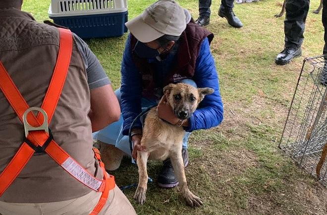 Spike quedará en adopción tras rescate del socavón en Puebla