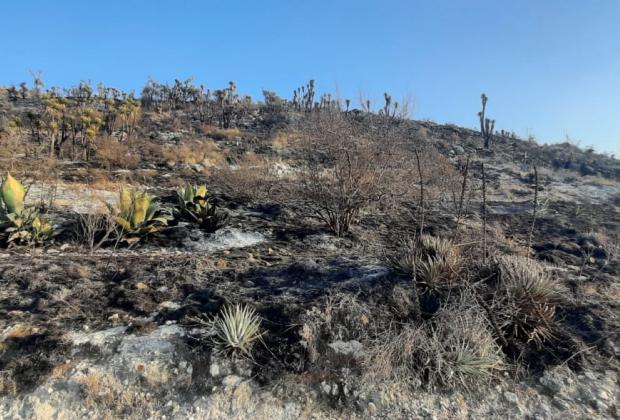 Incendio consume flora y fauna de la Reserva Cuicatlán-Tehuacán