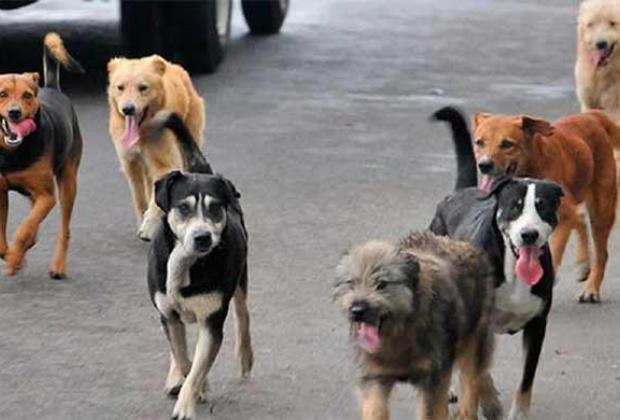 China prohíbe criaderos de perros para consumo por COVID19