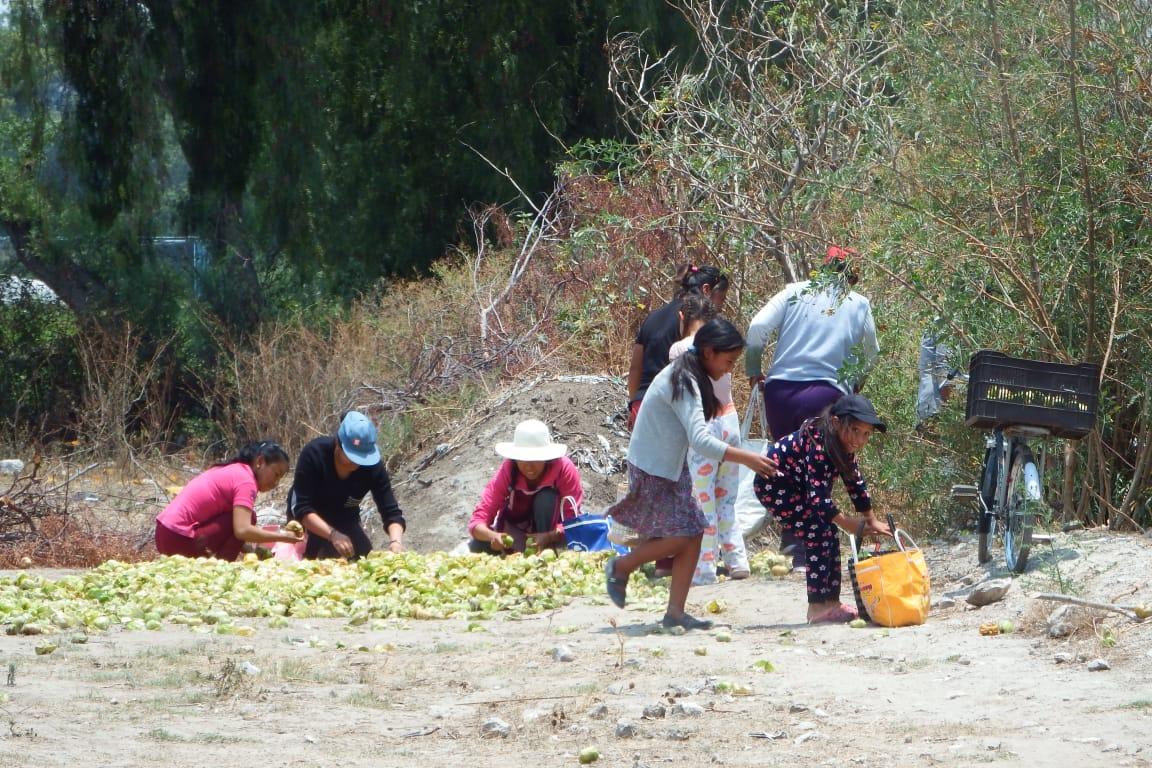 Productor regala 5 toneladas de tomates en Huixcolotla