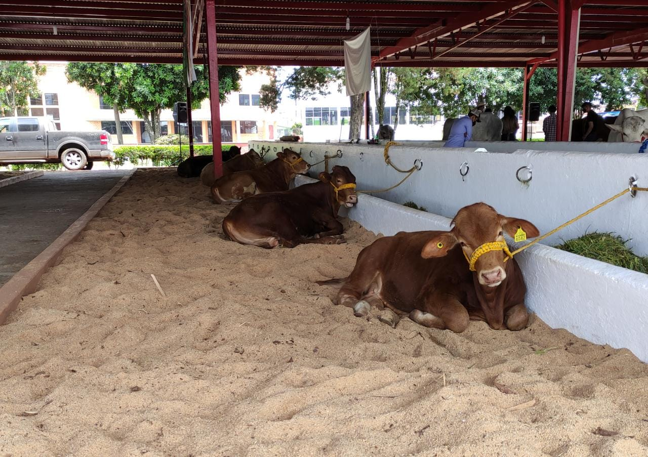 Podría crear la Fiscalía unidad para investigar robo de ganado en Puebla
