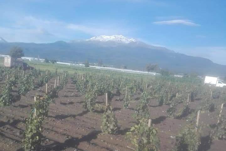 Sin apoyo del gobierno, en El Verde busca apuntalar cultivo de uvas