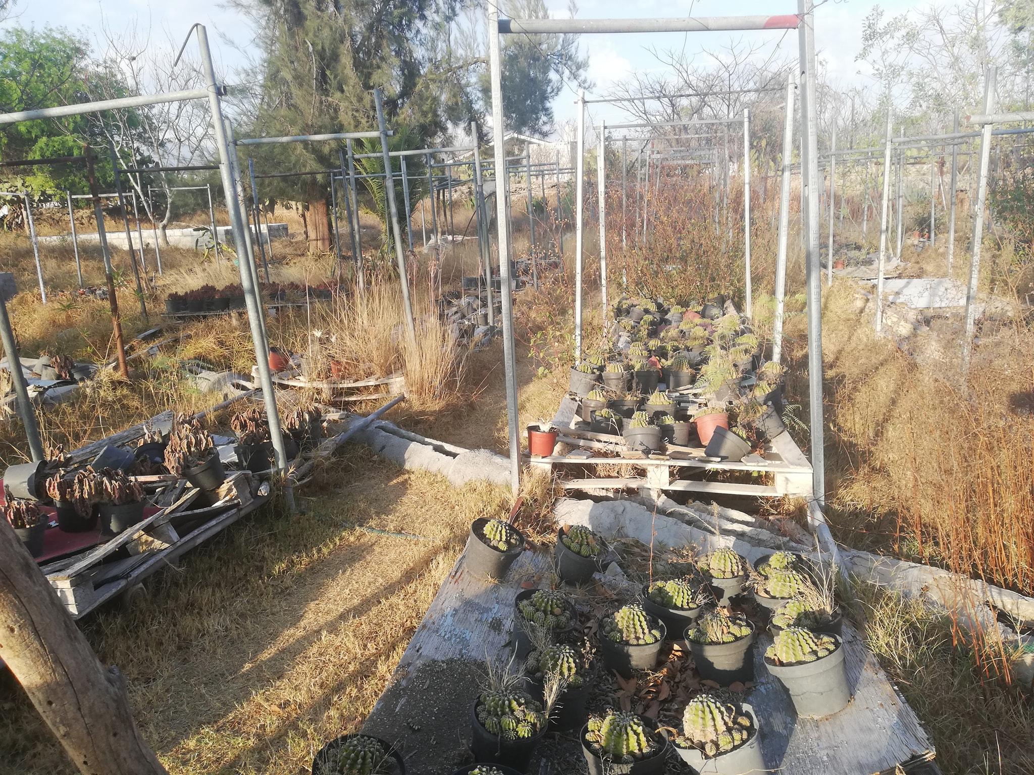 Condiciones del vivero municipal de Tehuacán no son óptimas: Dirección de Ecología