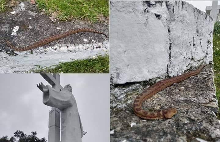 Ponen serpientes en escultura de Cristo ante vandalismo en Zacapoaxtla