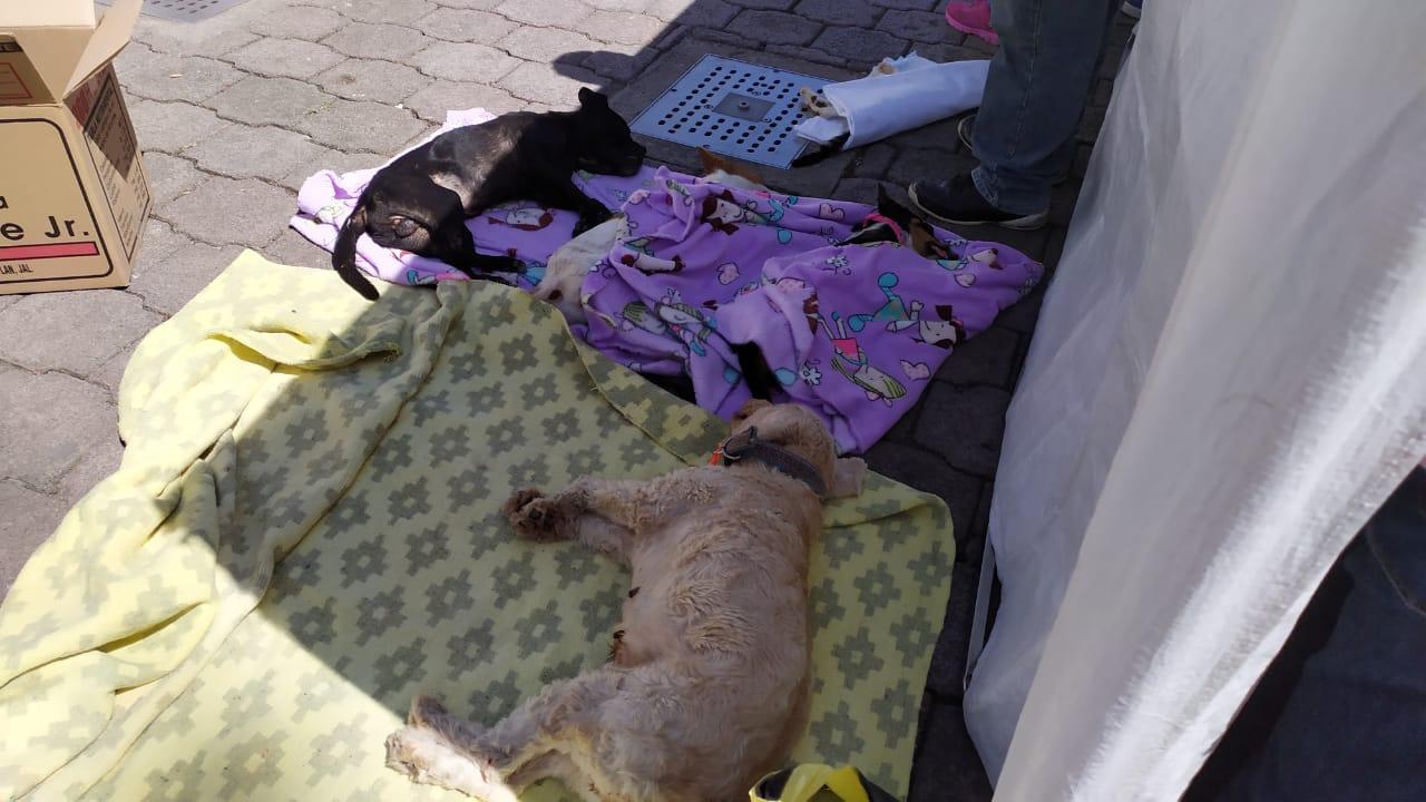 Hay alrededor de mil perros vagando en calles de Huauchinango