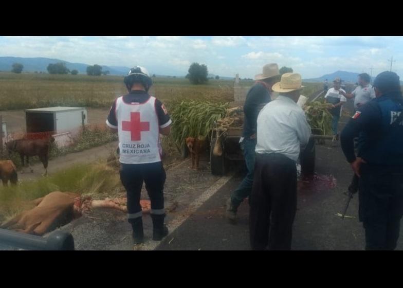 Conductor mata una yegua al impactar carreta en Serdán