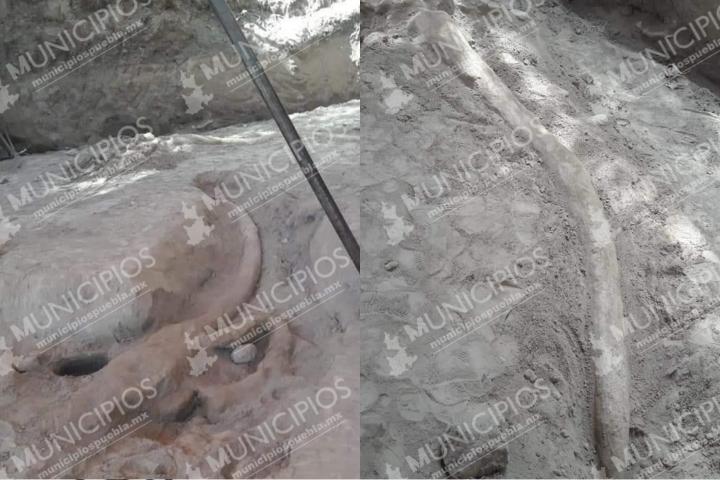 Iban a cortar nopales y hallaron un mastodonte en Felipe Ángeles