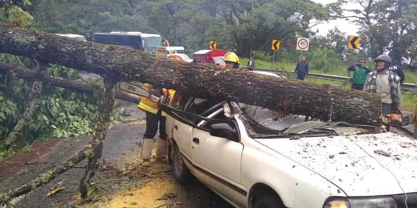 Árbol los aplasta al interior de su auto en la México-Tuxpan