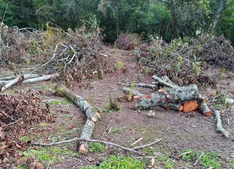 Talamontes saquean Huauchinango ante falta de vigilancia